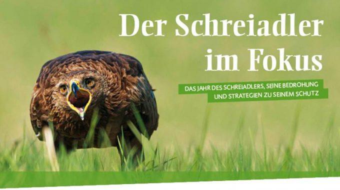 Schreiadler Hat Niedersachsen Erreicht