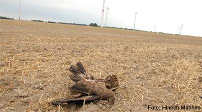 Jäger Und Falkner Für Schärfere Strafverfolgung Bei Nestzerstörung