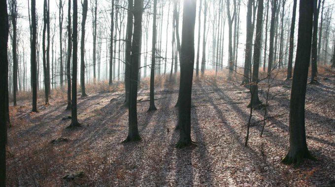 Deutsche Wildtier Stiftung Trauert Um Dr. Peter Wernicke