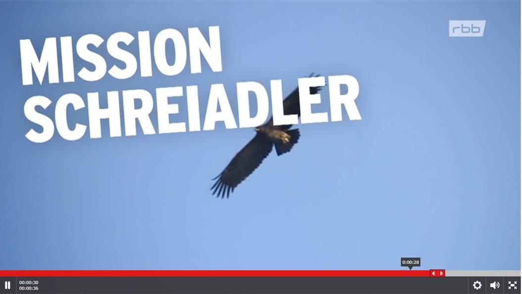 Mission Schreiadler In Brandenburg – Ein Film Des Rbb