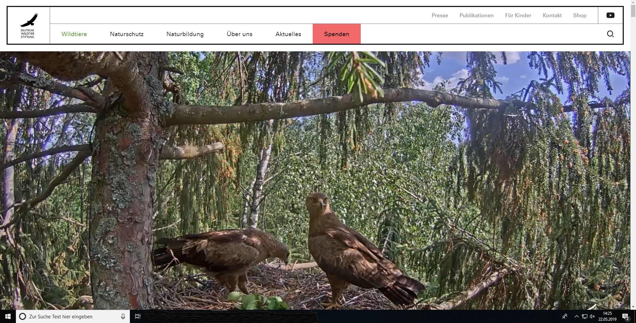 Adler-TV webcam
